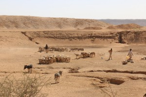Local nomads with their herds at the Great Hafir in Musawwarat; note the hafir's embankment in the background (photo: Claudia Näser)